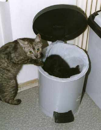 http://www.complang.tuwien.ac.at/alex/Pics/Cats/Ididntdoit.jpg